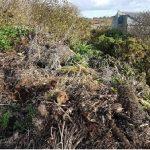 Quel avenir pour nos déchets verts ?