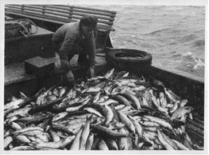 Georges à bord du Saint Christophe 1951